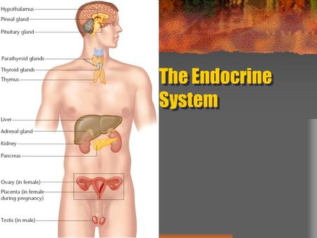 The Endocrine System. What is the Endocrine System? Glands in the body that secrete hormones Hormones stimulate growth and affect moods and emotions –
