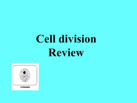 Cell division Review. This spot that holds the 2 chromatid copies together is called a ______________________ centromere.