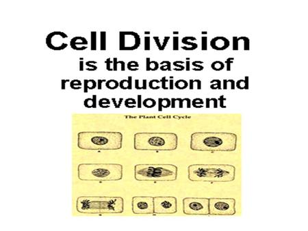 Cell Division Mitosis replaces worn-out old cells with fresh new duplicates.