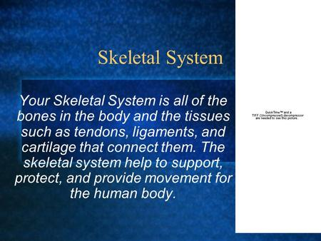 Skeletal System Your Skeletal System is all of the bones in the body and the tissues such as tendons, ligaments, and cartilage that connect them. The skeletal.