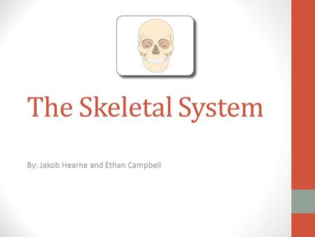 The Skeletal System By: Jakob Hearne and Ethan Campbell.