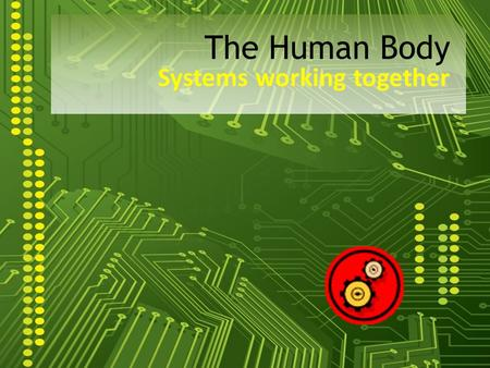 Systems working together The Human Body. Humans Have Systems For:  Movement/Support/Protection  Digestion  Circulation  Respiration  Excretion (Waste.