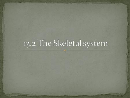 13.2 The Skeletal system.