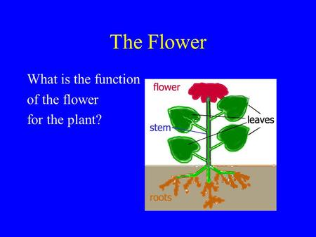 The Flower What is the function of the flower for the plant?