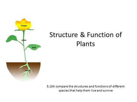 Structure & Function of Plants 5.10A compare the structures and functions of different species that help them live and survive.
