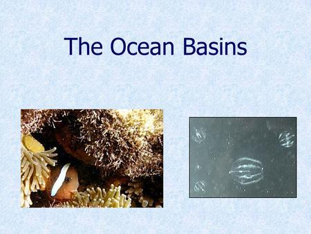 The Ocean Basins. Five Major Oceans Arctic Pacific IndianAtlantic Southern.