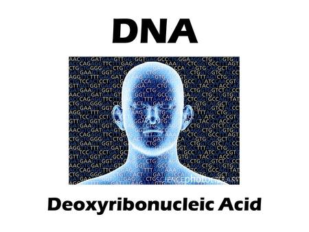 DNA Deoxyribonucleic Acid. The DNA Connection What have you learned about inheritance, DNA, and cell division up to this point? How do genes determine.