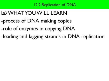 -process of DNA making copies -role of enzymes in copying DNA