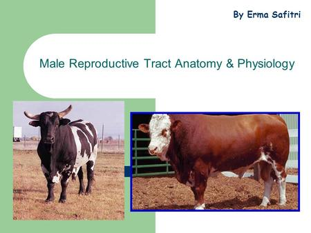 Male Reproductive Tract Anatomy & Physiology