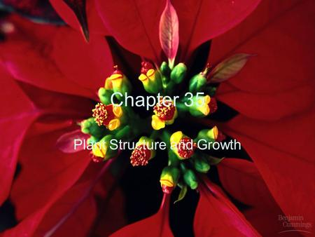 Chapter 35 Plant Structure and Growth. I. Two Systems A.Root System B.Shoot System.