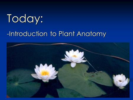 Today: -Introduction to Plant Anatomy. Plant Morphology Reflects the demands of two very different environments: Soil and Air Intro to Plant Anatomy.