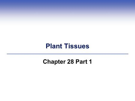 Plant Tissues Chapter 28 Part 1.