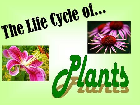 The Life Cycle of... Plants.