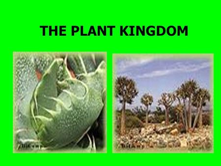 THE PLANT KINGDOM. 7 Basic needs of plants: * temperature *light *water *air *nutrients *time *room to grow.