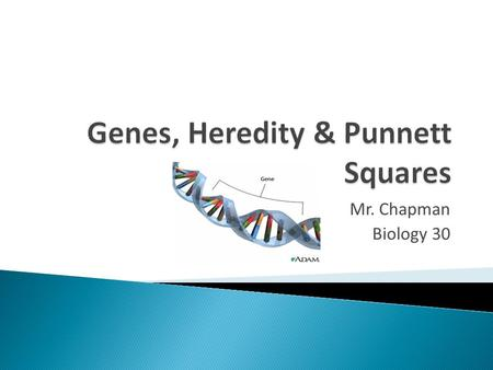 Genes, Heredity & Punnett Squares