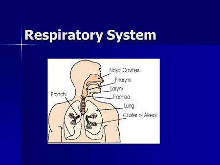 Respiratory System. Respiratory system/functions Nose: air enters Nose: air enters –Hairs block or trap dust and unwanted objects Nasal passage: warms.