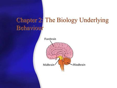 Chapter 2: The Biology Underlying Behaviour