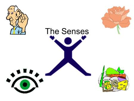 The Senses. Your five senses play in important role in your daily life. Every moment in your life, you use at least one of your five senses. You touch,