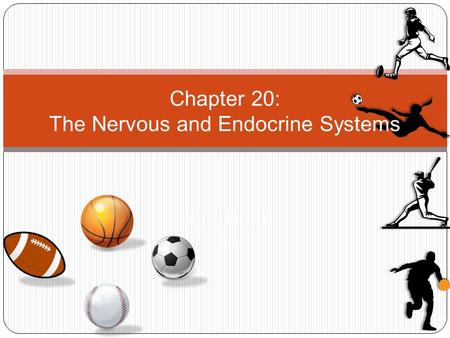 Pages 546 – 564 Date Chapter 20: The Nervous and Endocrine Systems.