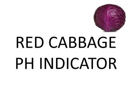 RED CABBAGE PH INDICATOR. THE PURPOSE OF THIS EXPERIMENT IS TO SHOW HOW TO MAKE YOUR OWN PH INDICATOR USING CABBAGE JUICE.