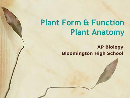 Plant Form & Function Plant Anatomy