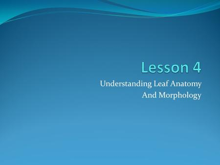 Understanding Leaf Anatomy And Morphology