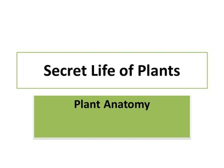 Secret Life of Plants Plant Anatomy. Terms Node – place where leaf petiole attaches Internode – stem between nodes Terminal bud – at the end of a branch.