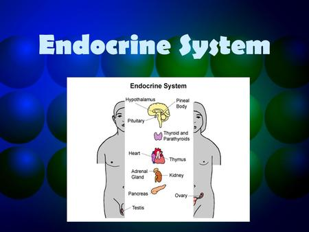 Endocrine System. Functions of the endocrine system Regulates the effects of hormones on the body functions. Controls growth, development metabolism and.
