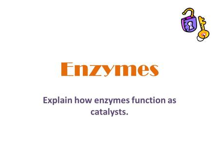 Explain how enzymes function as catalysts.