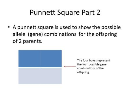 Punnett Square Part 2 A punnett square is used to show the possible allele (gene) combinations for the offspring of 2 parents. The four boxes represent.
