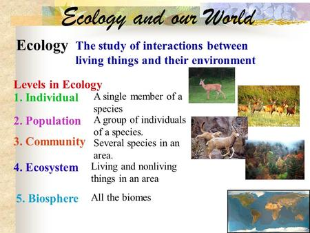 Ecology and our World Ecology The study of interactions between living things and their environment Levels in Ecology 1. Individual A single member of.