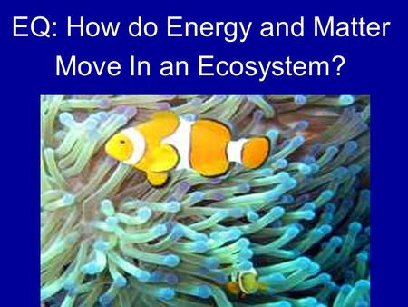 EQ: How do Energy and Matter Move In an Ecosystem?