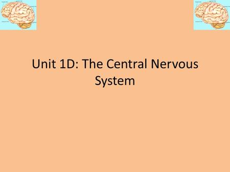 Unit 1D: The Central Nervous System