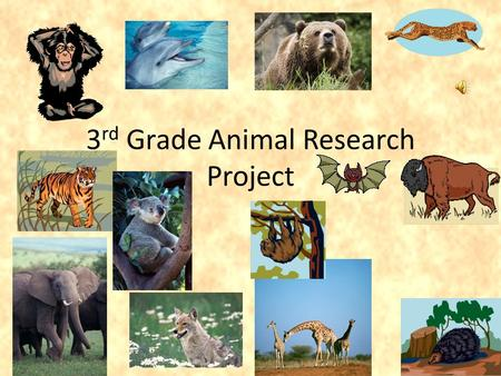 3 rd Grade Animal Research Project. Collecting Information It is your job to learn how to collect information using a variety of sources. For this project,
