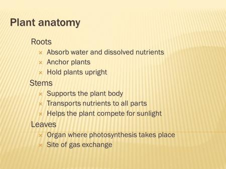 Plant anatomy Roots  Absorb water and dissolved nutrients  Anchor plants  Hold plants upright Stems  Supports the plant body  Transports nutrients.