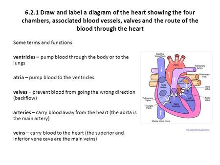 6.2.1 Draw and label a diagram of the heart showing the four chambers, associated blood vessels, valves and the route of the blood through the heart Some.