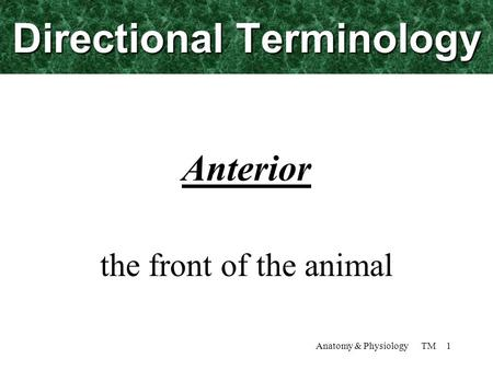 Anatomy & Physiology TM 1 Directional Terminology Anterior the front of the animal.