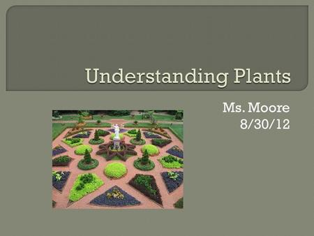 Ms. Moore 8/30/12.  Plants are: Multicellular Eukaryotes Photosynthesis using chlorophyll Most are autotrophs (some can be parasites or saprobes that.