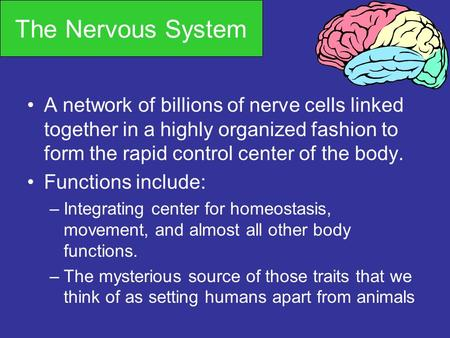 The Nervous System A network of billions of nerve cells linked together in a highly organized fashion to form the rapid control center of the body. Functions.