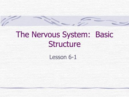 The Nervous System: Basic Structure Lesson 6-1. Objectives: Identify Parts of the Nervous System Describe the functions of the Nervous System.