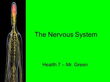 The Nervous System Health 7 – Mr. Green. Jobs of the Nervous System 1. Gathers information 2. Responds to information 3. Maintains homeostasis.