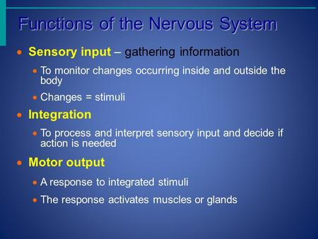 Functions of the Nervous System Functions of the Nervous System  Sensory input – gathering information  To monitor changes occurring inside and outside.