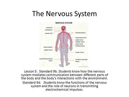 The Nervous System Lesson 5: Standard 9b. Students know how the nervous system mediates communication between different parts of the body and the body's.