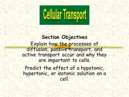 Section Objectives Explain how the processes of diffusion, passive transport, and active transport occur and why they are important to cells. Predict the.