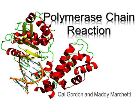 Qai Gordon and Maddy Marchetti. What is Polymerase Chain Reaction? Polymerase Chain Reaction ( PCR ) is a process that amplifies small pieces of DNA to.