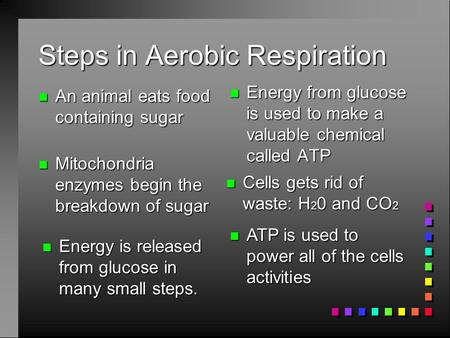 Steps in Aerobic Respiration n An animal eats food containing sugar n Energy from glucose is used to make a valuable chemical called ATP n Mitochondria.