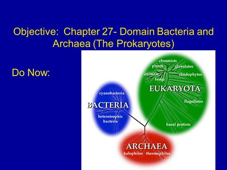 Objective: Chapter 27- Domain Bacteria and Archaea (The Prokaryotes) Do Now: