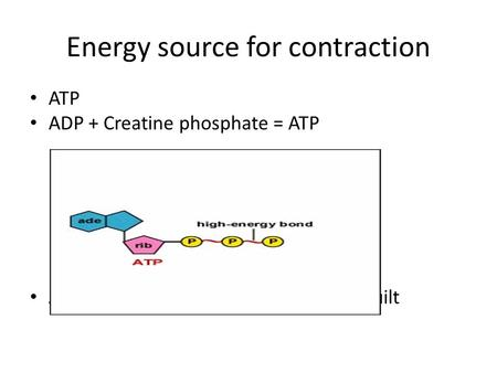 Energy source for contraction ATP ADP + Creatine phosphate = ATP ATP is constantly broken down and rebuilt.