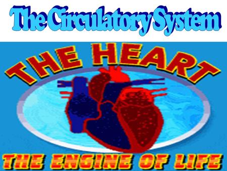 The circulatory system is the body system that transports Nutrients, OXYGEN & CELLULAR WASTE throughout the body.