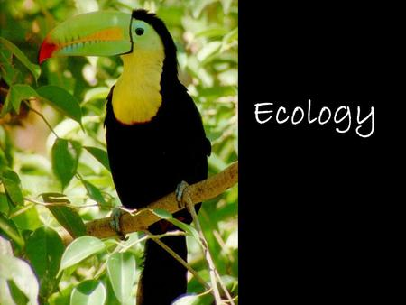 Ecology. WHAT IS ECOLOGY? Ecology- the scientific study of interactions between organisms and their environments. *Focus is on energy transfer *Ecology.